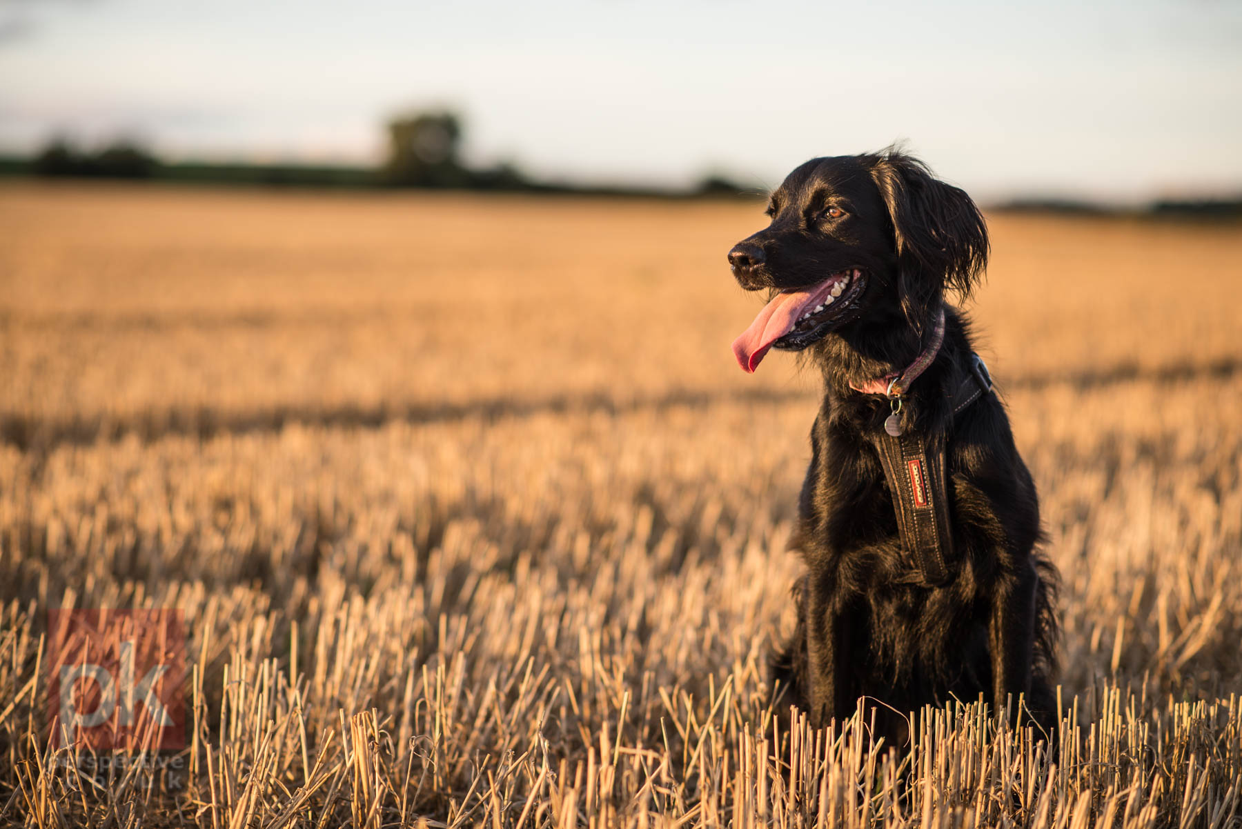 Testing the 85mm F1.8 lens in the local Luncarty fields - never work with children or animals ;)